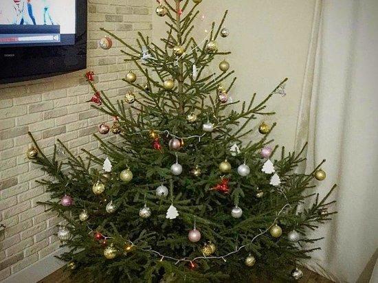 Пункт приема новогодних елок открылся в Обнинске