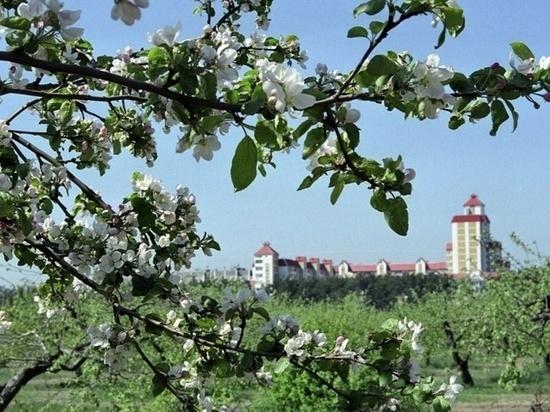 Яблоневые сады в Воронеже вернутся в федеральную собственность