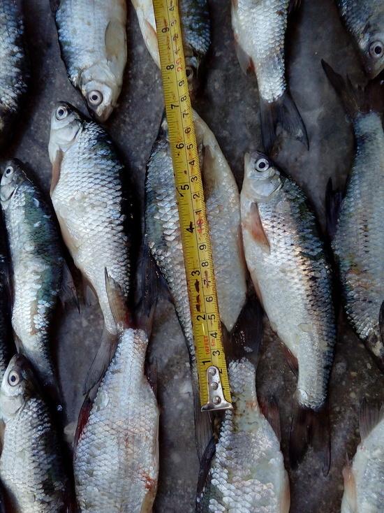 40 кг тарани выловил браконьер в Бейсугском лимане