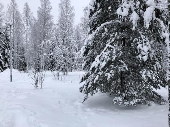 Обильный снег обещают синоптики регионам ЦФО