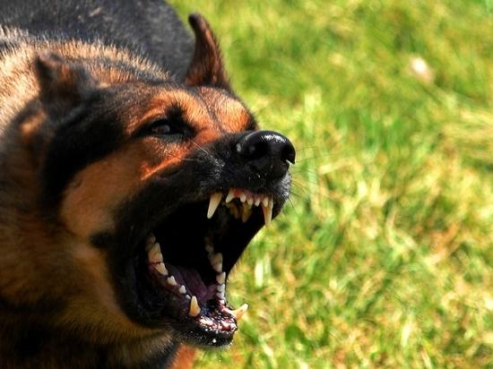 Калининград: собаки-убийцы против честных бюргеров