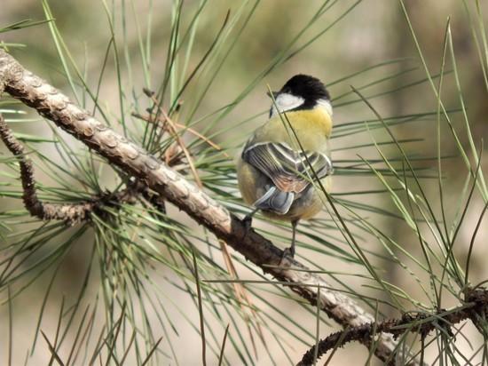 Ученые установили, что глобальное потепление заставляет птиц убивать