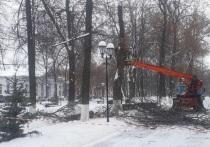 В Демидовском сквере Ярославля пилят столетние липы