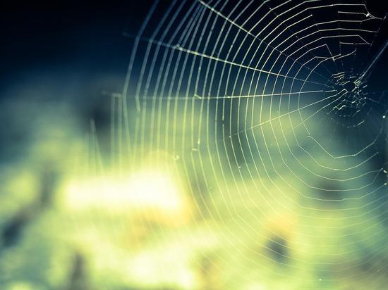 Жители Бразилии запечатлели на видео «дождь из пауков»