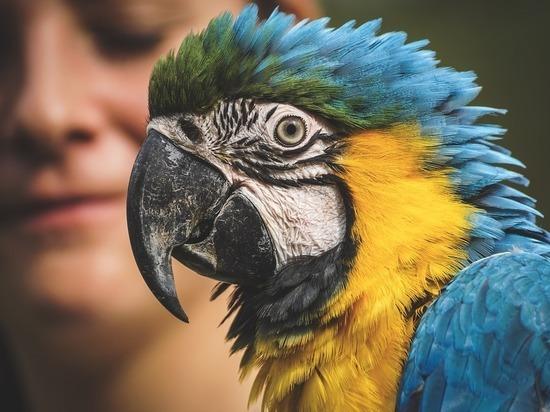 Московские попугаи массово заболели из-за недостатка солнечного света
