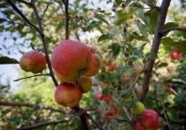 Какие 4 фрукта помогут восстановить печень после веселых праздников