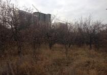 Скандал с яблоневыми садами в Воронеже близится к логическому завершению