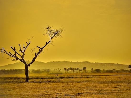 Британские климатологи рассказали о «последнем шансе избежать глобальной катастрофы»