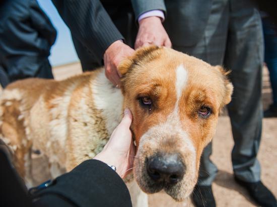 В Астрахани мошенники поживились за счет «умирающих» животных