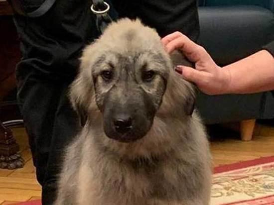 Президент Сербии подарил Путину щенка с политическим подтекстом