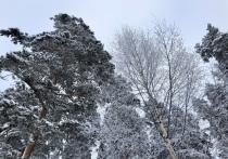Снежный циклон приходит в ЦФО