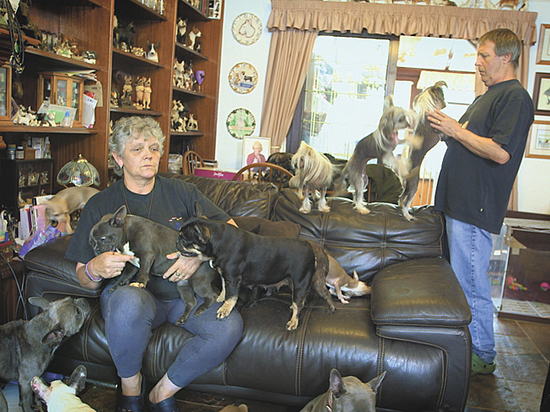 Зоошиза: ненормальное отношение к животным разрушает психику и семью