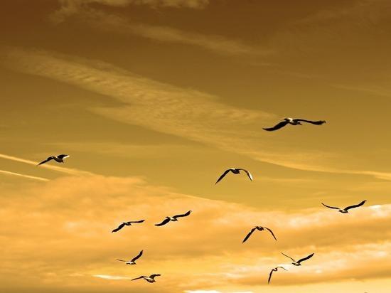 Изобретатель предложил запрягать птиц для полета на аэростате