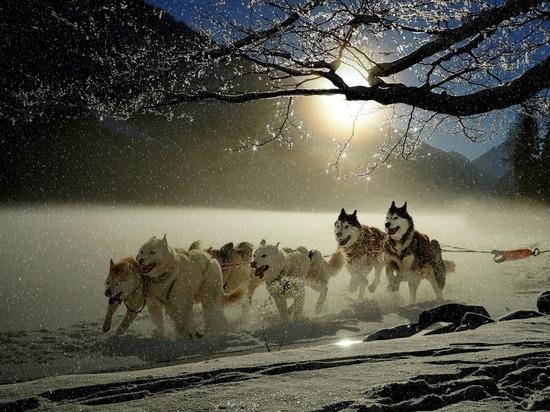 В «Дружбе» можно будет прокатиться на аляскинских маламутах и хаски