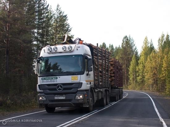В Карелии незаконно вырубили лес на 160 миллионов рублей