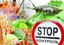 В Тверской области досмотрены грузы с подкарантинной продукцией