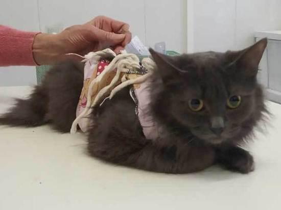 Столичные зоозащитники начали делать бесплатные операции кошкам и собакам
