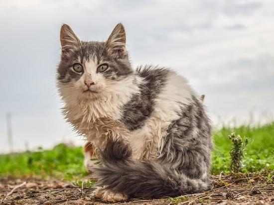Зоозащитники: «Алтайский край не готов к реализации закона о запрете убийства бездомных животных»
