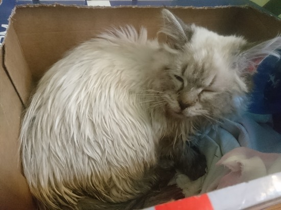 В Бишкеке ветеринарная клиника отказалась принять кота с тяжелыми травмами