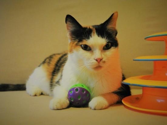 Новосибирский приют ищет 10 тыс. руб. на операцию для кошки