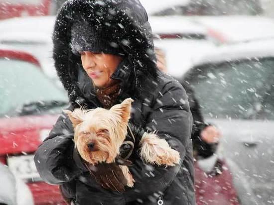 Эколог и гляциолог рассказали о ядовитом российском снеге