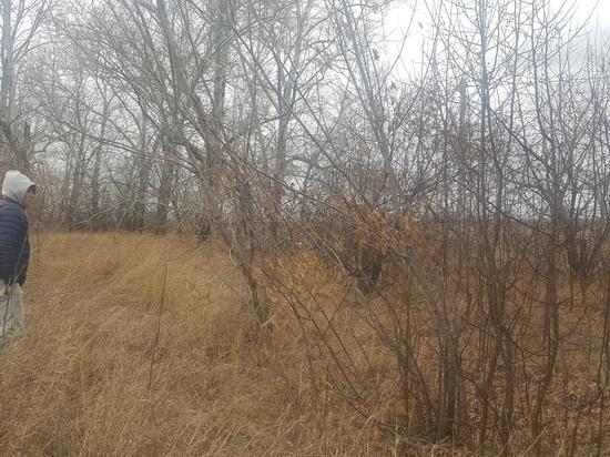 Барнаульская мэрия выделила многодетным семьям под застройку землю, не пригодную даже для посадки картофеля
