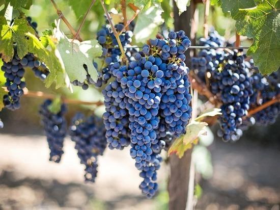 В Египте обнаружено древнее хранилище вина