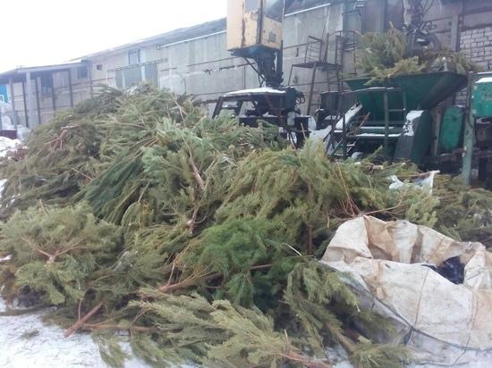Почти все новогодние елки вывезли из населенных пунктов Ульяновской области