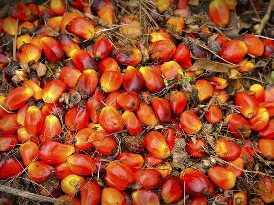 Россия вдвое увеличила закупки пальмового масла: эксперты бьют тревогу