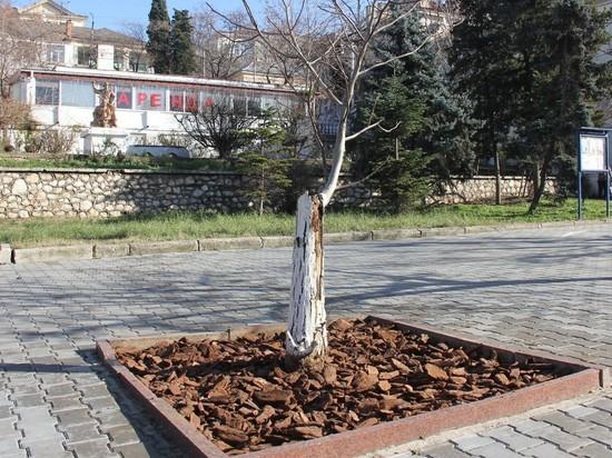 В Севастополь с материка привезли 62 тонны сосновой коры
