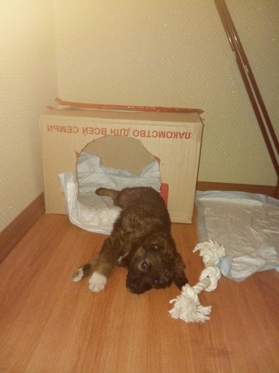 В Оренбурге два официальных приюта для собак и много волонтеров