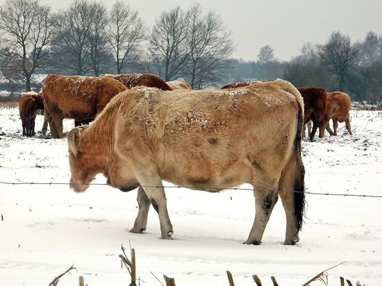 Нижегородские депутаты взялись за возрождение сельхозкооперации на селе