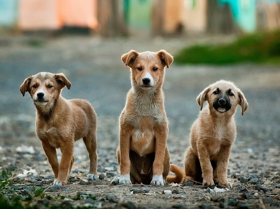 «Стая собак не дает нам жить»: барнаульцы жалуются на бездомных животных