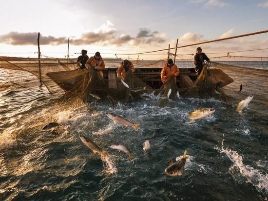 Кому выгоден передел рынка в рыбной отрасли