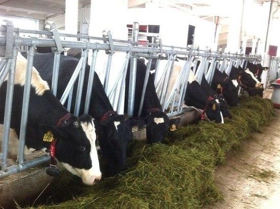 В сельское хозяйство Калужской области инвестировано 16,7 млрд рублей