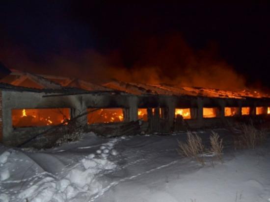 В Чувашии во время пожара заживо сгорели 19 коров