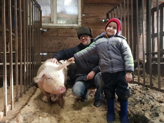 Наши Маши: хлопоты и радости свиноматок «Жемчужины Бурятии»