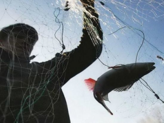 Ставропольчанин незаконно ловил рыбу на территории Калмыкии