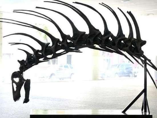 Новый вид динозавров с шипами на спине нашли в Аргентине
