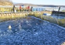 В Приморье действует тюрьма китового режима