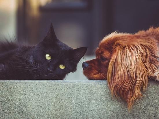 В Нижегородской области бесплатно вакцинируют от бешенства домашних животных