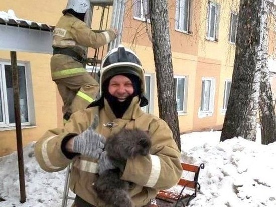Сотрудники белгородского МЧС спасли с дерева кошку