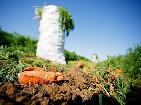 Какие сорта моркови лучше посадить волгоградцам этой весной