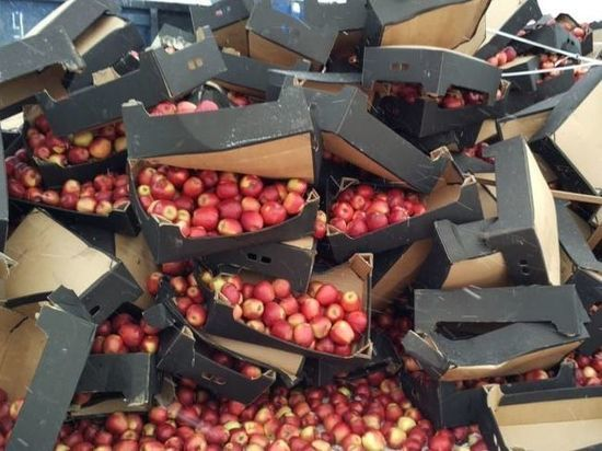В Петербурге уничтожили 19,5 тонн свежих польских яблок