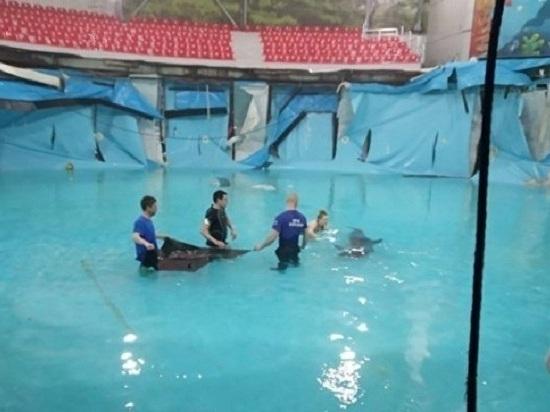 В Алуштинском дельфинарии животных спасало МЧС: разгерметизация бассейна