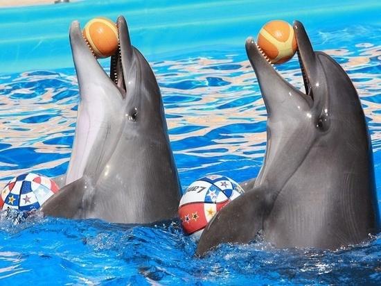 «Без криминала»: стало известно о причинах ЧП в дельфинарии Алушты