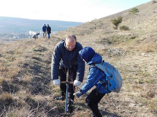 В Феодосии на Лысой горе появились тысячи деревьев