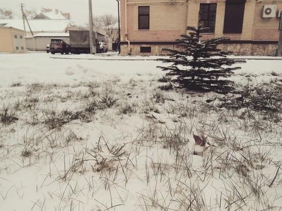 В Псковской области в четверг будет до +2 градусов тепла