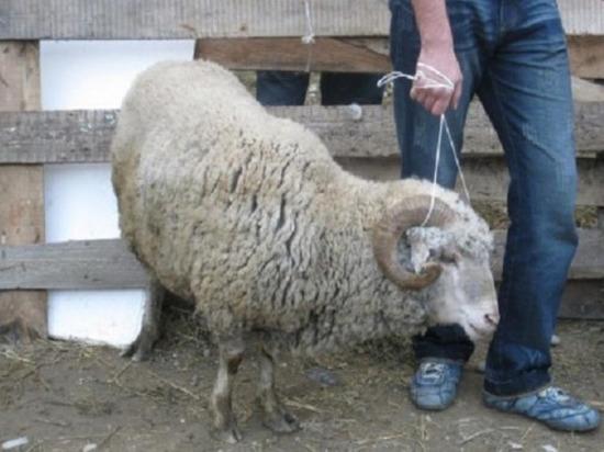 Житель калмыцкой столицы на даче приютил чужой скот