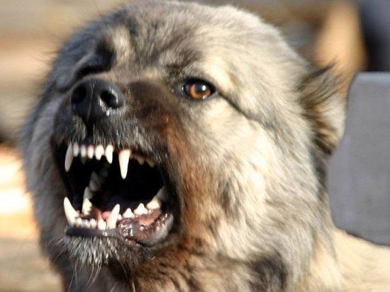 Глава Тульского муниципалитета персонально ответит за кусачих собак